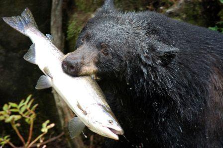 ketchikan-bear-tour.jpg