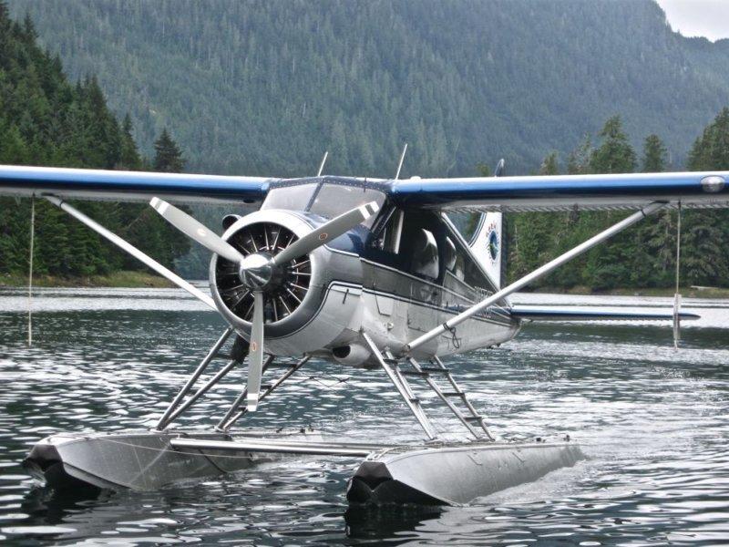 "Winging It in Alaska ... ""Bear""ly"