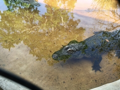 Gator at Sawgrass Mills Recreation Park