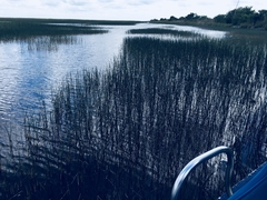Everglades.2