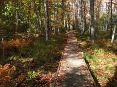 Jesup Path, Acadia National Park