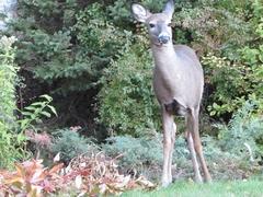 Deer Sighting-2